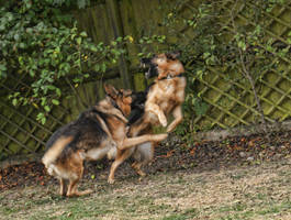 My pups playing in the garden