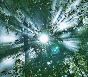 smoke sunlight and nature