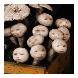 Baby mushrooms by mwatkins