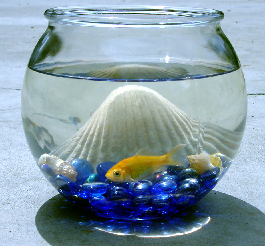 Goldfish bowl for How to make a fish bowl