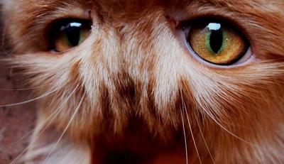 Amber eyes by Shamma-Alfalasi