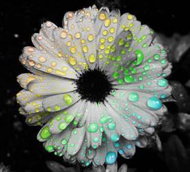 A Rainbow's Tears by tristefleur