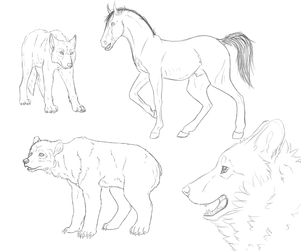 Realistic Animal Practise Sketches By Opaleyedwolf On