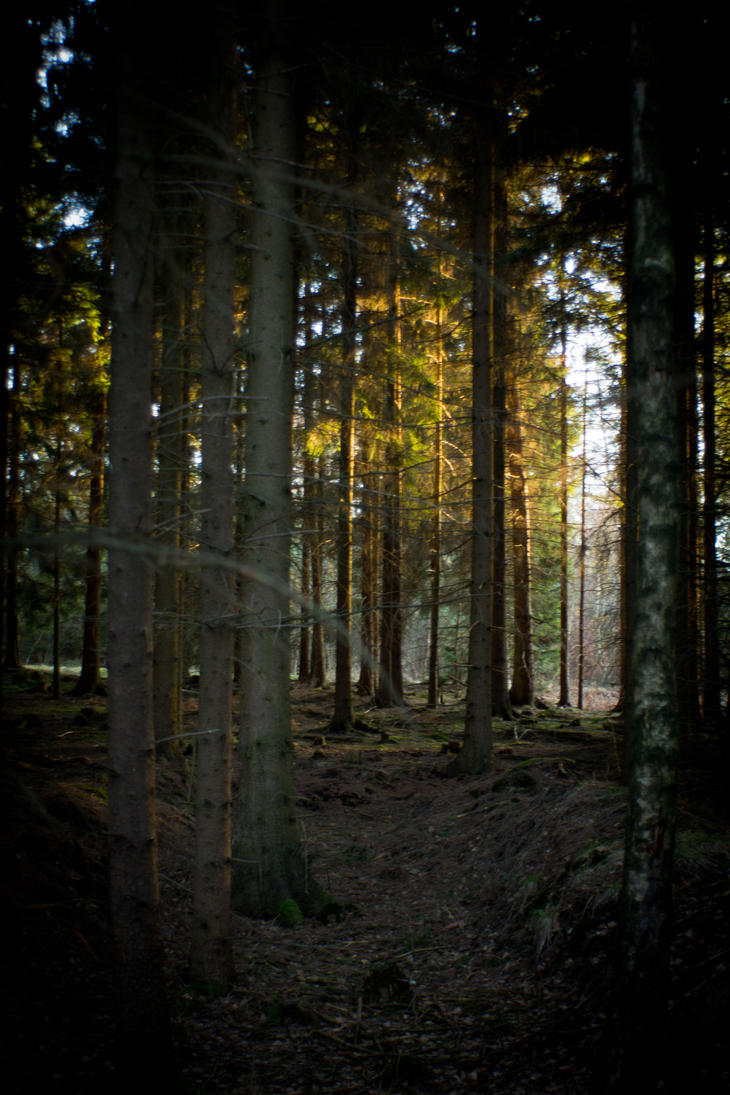 Forest at sunset 8 by mprangenberg