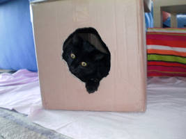 The Box by mprangenberg