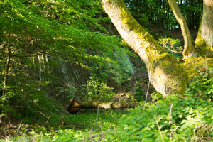 Enchanted Forest 2 by mprangenberg