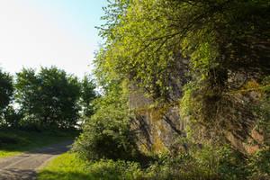 Overgrown ruin by mprangenberg