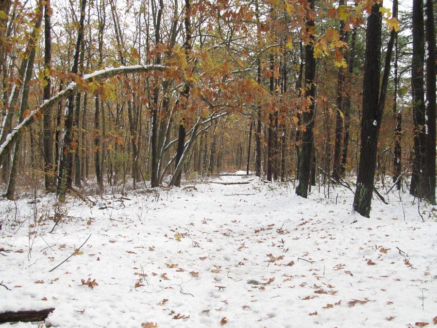 Winter in Autumn by FaultyStar15