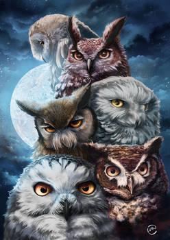 Owls squad