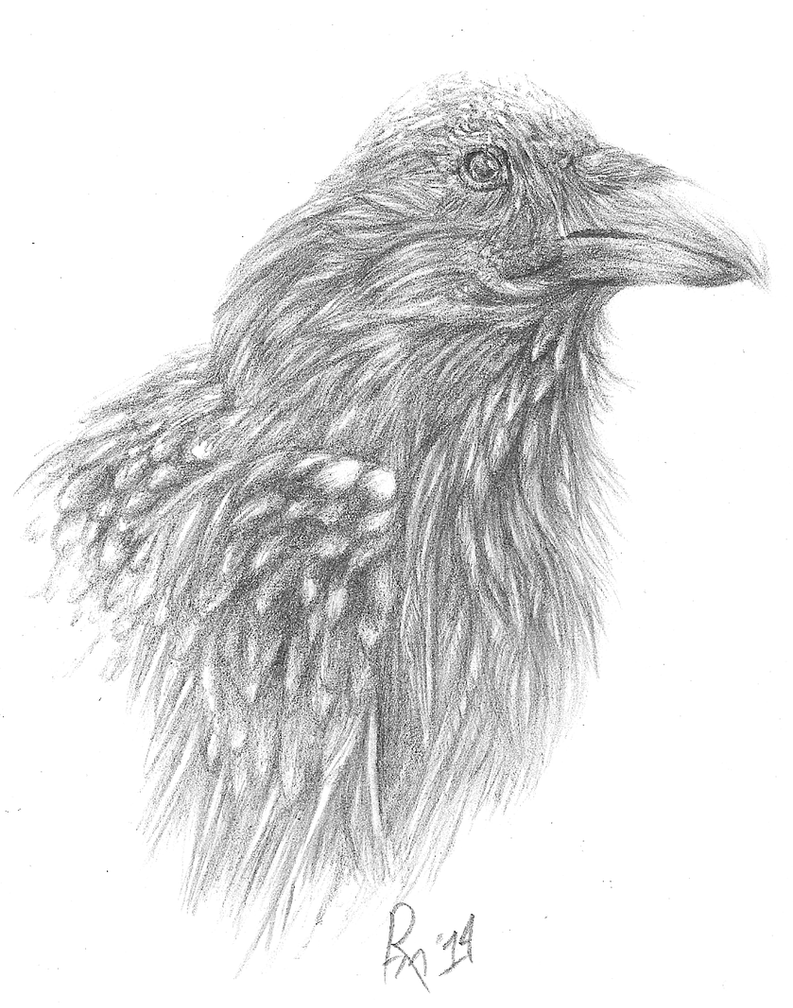 Raven by Erigyr