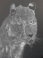 Spotless Leopard