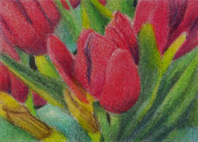 Tulips ATC by waughtercolors