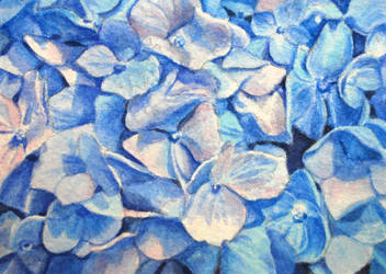Shirley's Hydrangeas ATC by waughtercolors