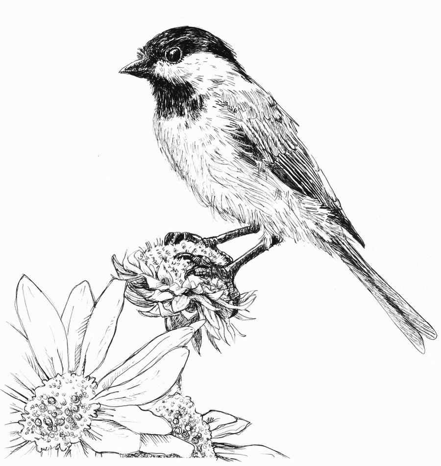 Chickadee Pen And Ink By Waughtercolors On DeviantArt