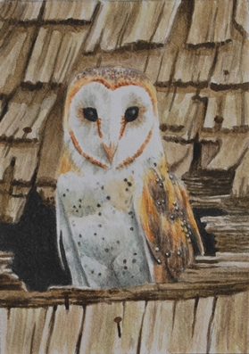 Barn Owl and the Roof ACEO by waughtercolors on deviantART