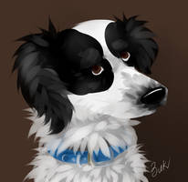 puppy of the spirit of Alaska