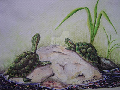 Turtles by chriskilue