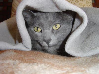 Hiding! by chriskilue