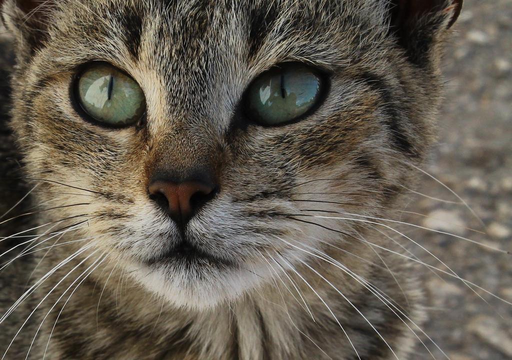 Cat Body Parts On Petantics