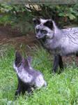 silver fox mom