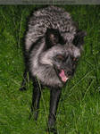 hungry fox mom