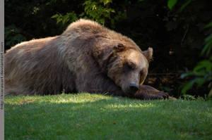 bear dreams by KIARAsART