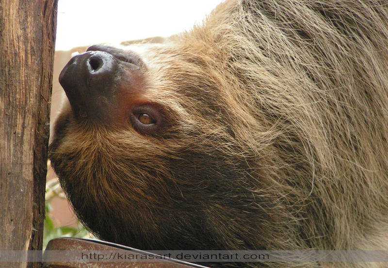 A Girl Obsessed With Sloths Gets Surprised With A Sloth ...