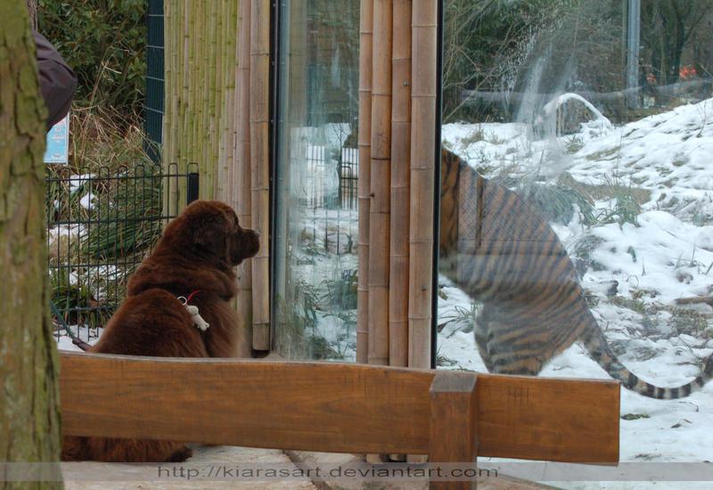 teddy dog vs tigger baby by KIARAsART