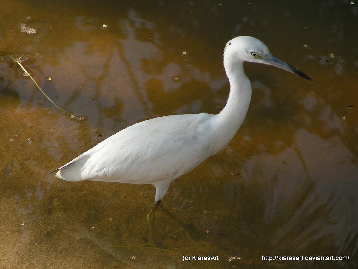 white water bird by KIARAsART