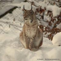 snowy lynx by KIARAsART
