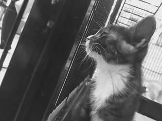 Kitten by REALMaximumRide