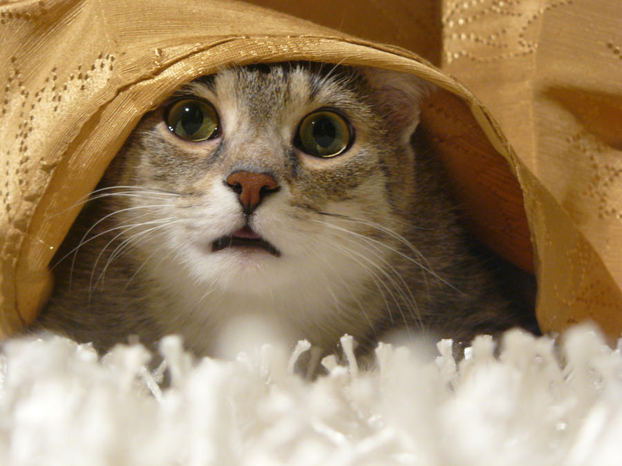 My Cat 4 by Yumi226