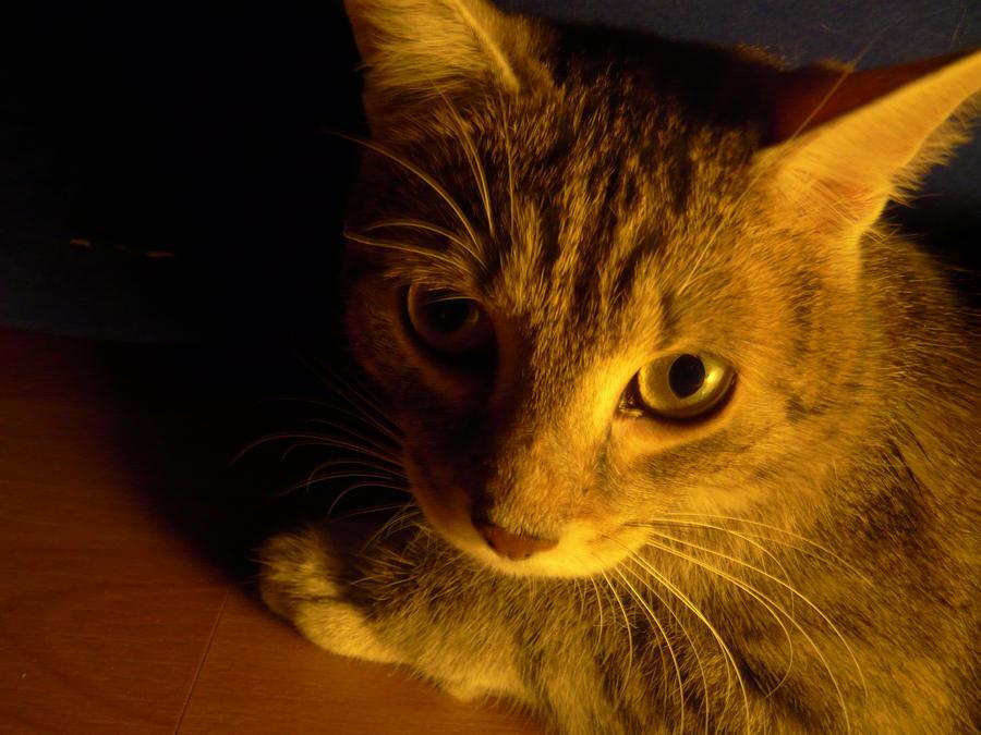 Kitty by Yumi226