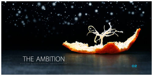 Winter Trees: The Ambition