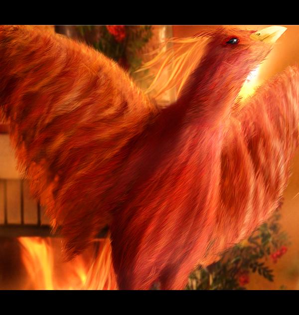 Phoenix by bodzi0x