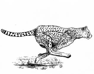 Cheetah by doctor-morbius