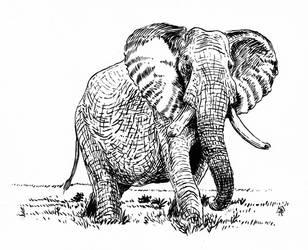 Elephant by doctor-morbius