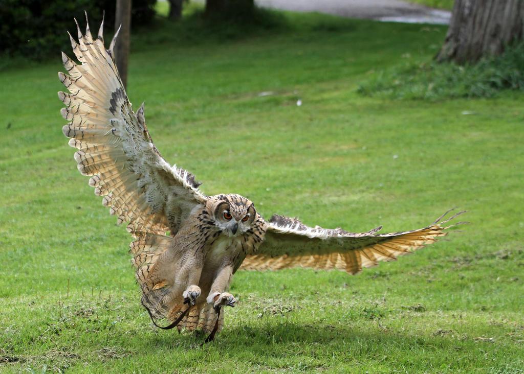 Owl 03
