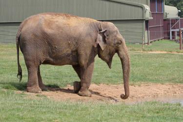 Elephant 02 by LydiardWildlife
