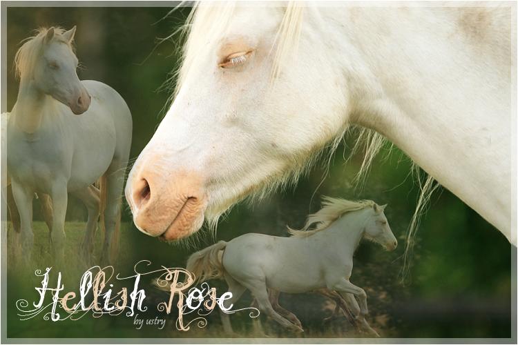 Forum des Forums: A la recherche du nouveau staff créactifs - Page 2 Graphic_arts___horses_by_ustry-d2xz9rx