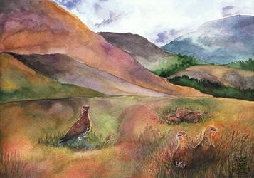 WaCo - Highlands and Red Grouses by wolfgryph