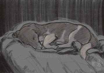 Sleeping Luki