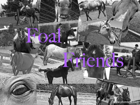 Foal Friends Collage
