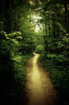 Deeper into woods