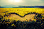 There is a heart in the field