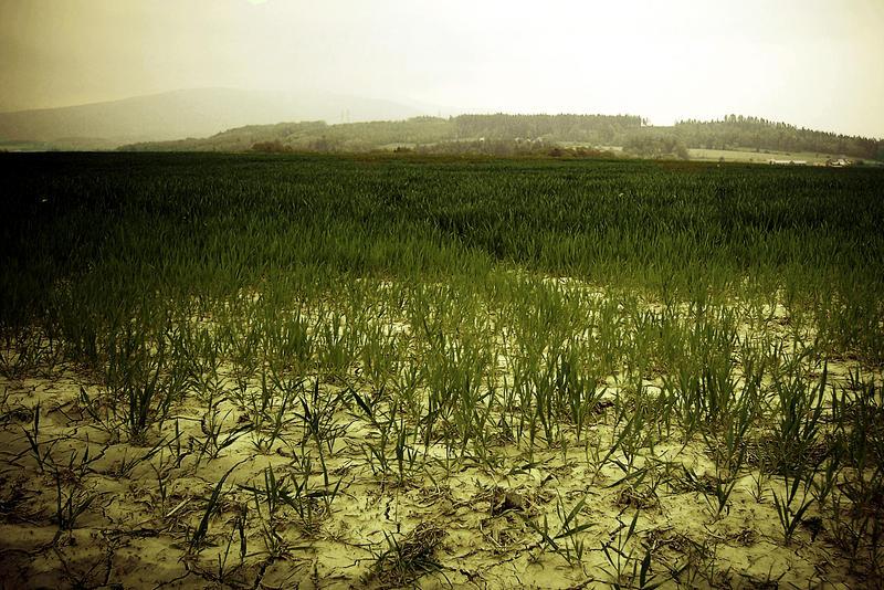 Dying field