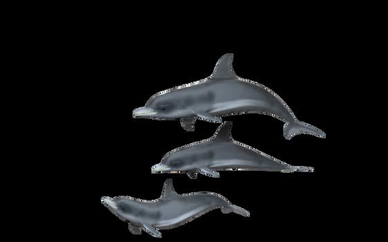 Dolphins Transparent Background