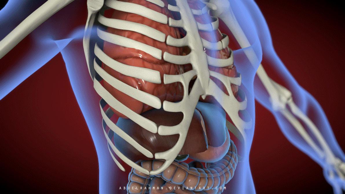 Anatomy in Motion by abdelrahman on DeviantArt