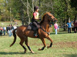 Chestnut Eventing Horse: Stock