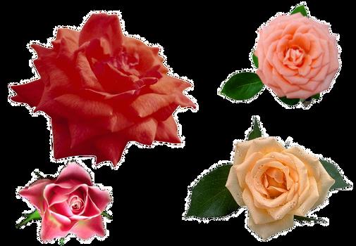 Png Roses